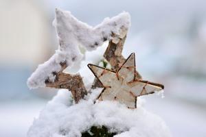 Sneeuwster